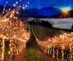 light and vineyard image