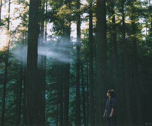 forest, tree, and photography image