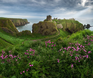 nature, flowers, and scotland image