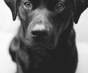 dog, black and white, and black image