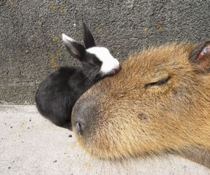 animal and sleep image