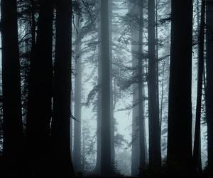 Darkness, forest, and nature image