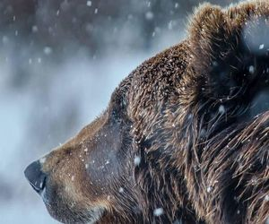 bear, snow, and animal image