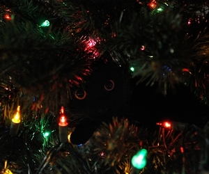black cat, cat, and christmas image