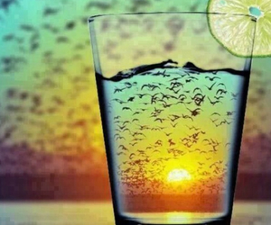 birds, chill, and glass image