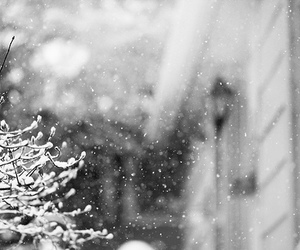 snow, beautiful, and nature image