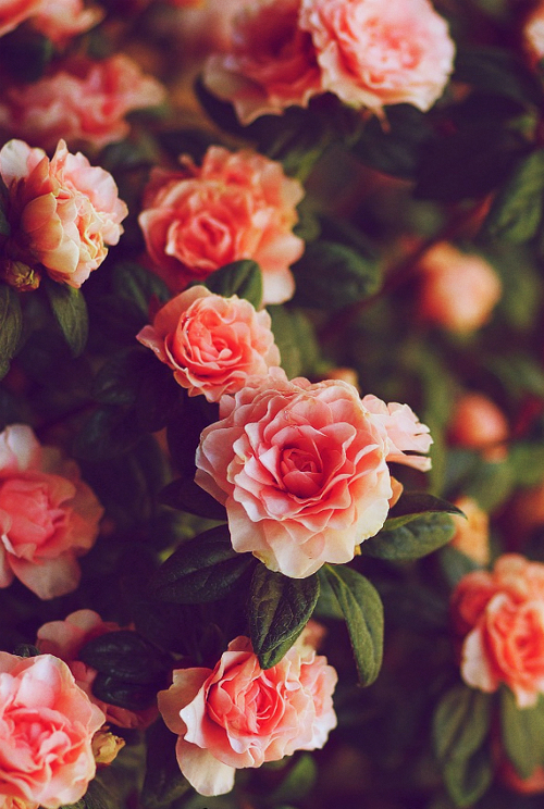 Fiori Tumblr.Image About Cute In Photography By Mariah On We Heart It