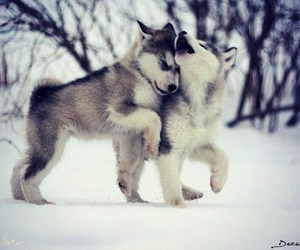 cute, dog, and snow image