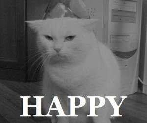 cat, happy, and funny image