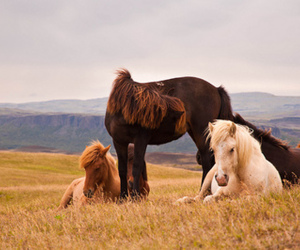 horse and equine image