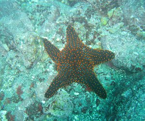 ocean, sea, and star image