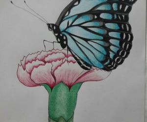 butterfly drawing image