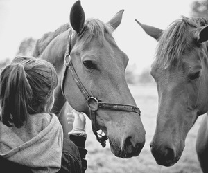 black and white, horses, and girl image
