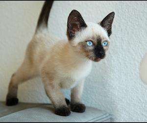 cat, djur, and cute image