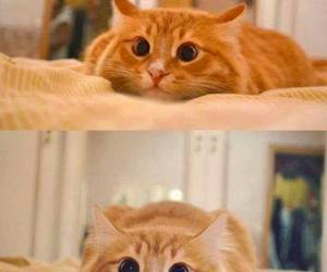 cat and eyes image