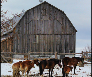 barn, cold, and winter image