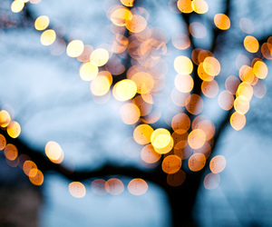 lights, tree, and winter image