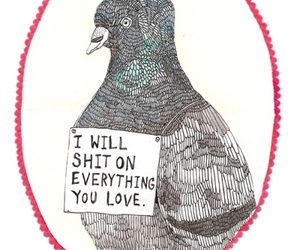 shit, bird, and funny image