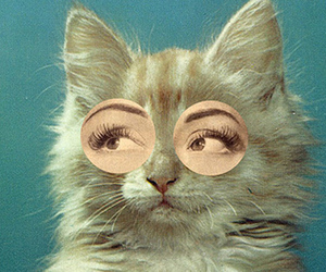 60's, cat, and separate with comma image