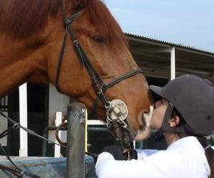 equestrian, horse, and love it image