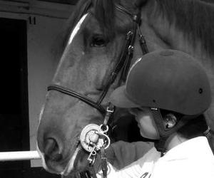 black and white, equestrianism, and equestrian image