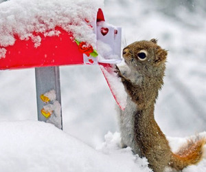 snow, animal, and squirrel image