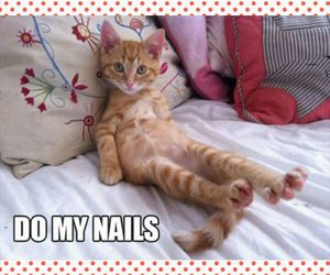 manicure, nails, and pedicure image
