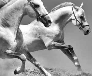 animal, equestrian, and horse image