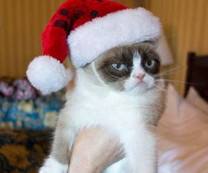 grumpy cat, cat, and christmas image