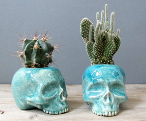 cactus, plants, and skull image