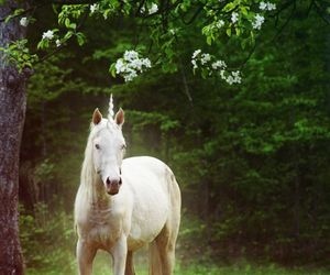 unicorn, horse, and nature image
