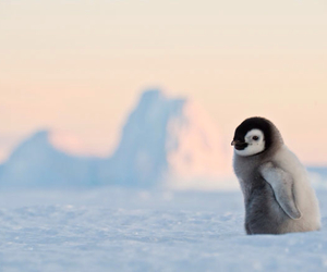 penguin, cute, and snow image
