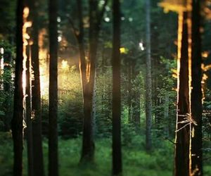 forest, lovely, and green image