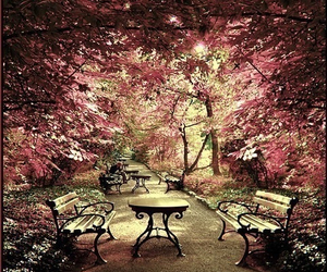 tree, pink, and bench image