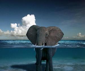 big, elephant, and sea image
