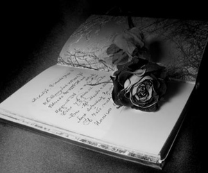 rose, book, and black and white image