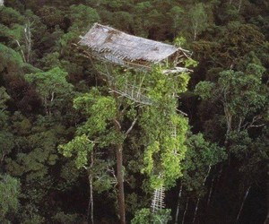 Houses, tree, and New Guinea image
