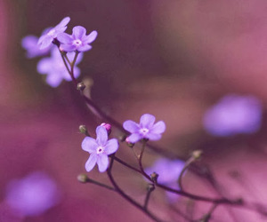delicate, flowers, and photography image
