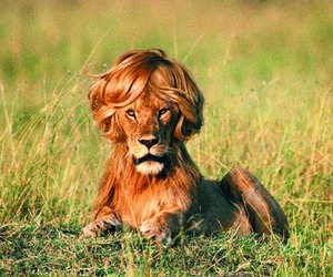 funny and lion image