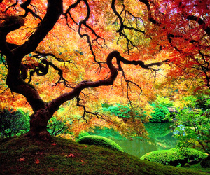 colorful, leaves, and trees image