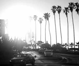 holiday, palms, and summer image