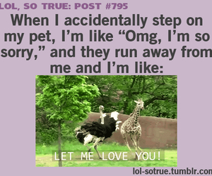 pet, quote, and funny image