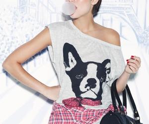 bag, dog, and fashion image