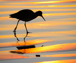 bird, ripples, and platinumheartaward image