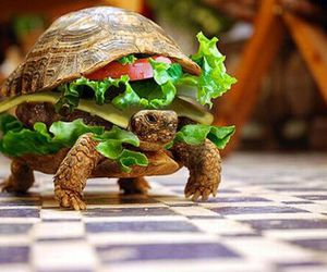 turtle, funny, and food image