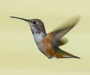 hummingbird, blinkagain, and bestofblinkwinners image