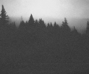 forest, black and white, and dark image