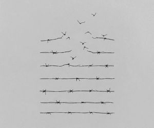 birds, lines, and fly image