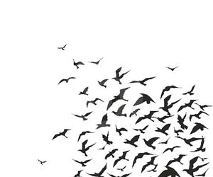 birds and overlay image