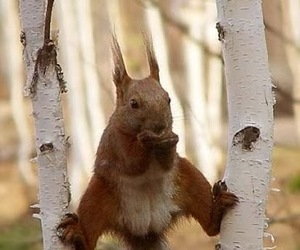 animal, eating, and squirrel image